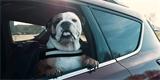 Jak bezpečně převážet psa v autě? Tyto rady se hodí nejen cestou na dovolenou
